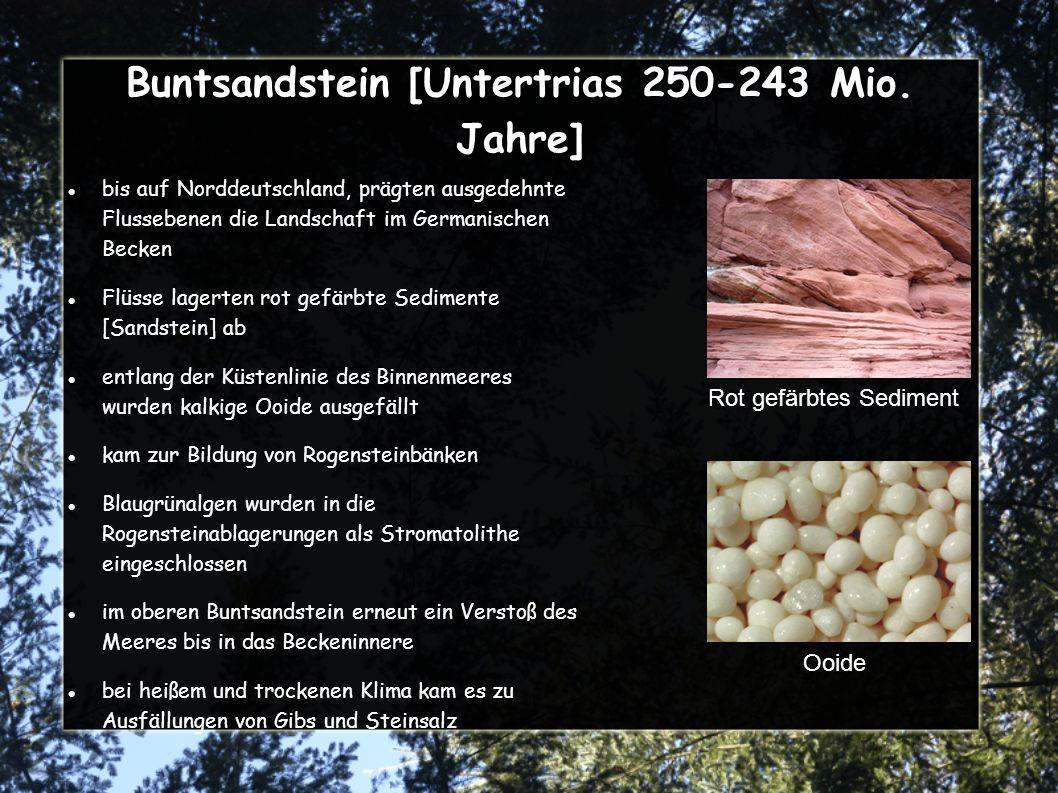 Buntsandstein [Untertrias 250-243 Mio. Jahre]